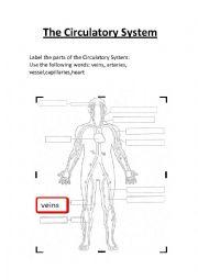 English Worksheet: The Circulatory System worksheet.Label