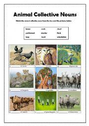 Animal Collective Nouns(2)