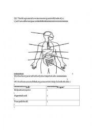 English Worksheet: The Digestive System