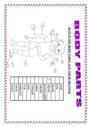 English Worksheet: BODY PARTS-MATCHING