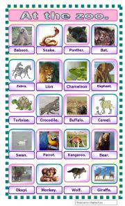 English worksheet: At the zoo: pictionnary.