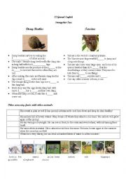 English Worksheet: Amazing facts about animals