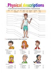 English Worksheet: Parts of the body/ Physical descriptions
