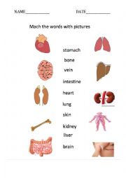 Intrernal parts of body