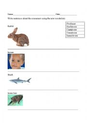 English Worksheet: Food Chain Vocabulary Practice