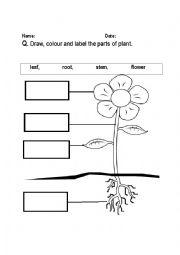 parts of plant labeling worksheet