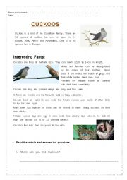 English Worksheet: Cuckoos