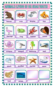 English Worksheet: ANIMALS LIVING IN OR NEAR WATER
