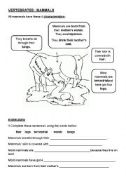 English Worksheet: mammals characteristics