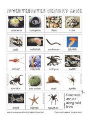 English Worksheet: Animals - Invertebrates Memory Game