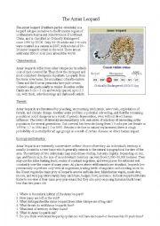 Amur Leopard Worksheet