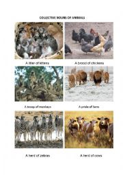 English Worksheet: Collective Nouns for Animals