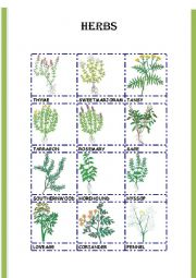 English Worksheet: HERBS