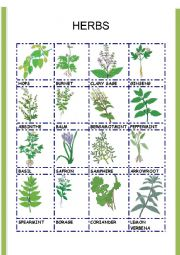 English Worksheet: HERBS 2