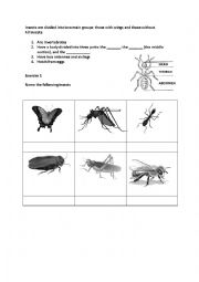 english worksheets what makes an insect. Black Bedroom Furniture Sets. Home Design Ideas