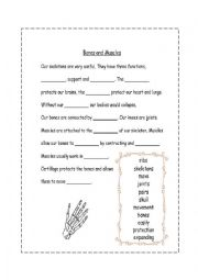 English Worksheet: MUSCLES AND BONES