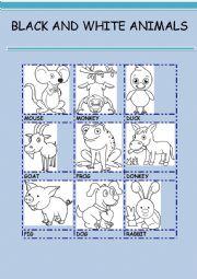 English Worksheet: BLACK AND WHITE ANIMALS 3