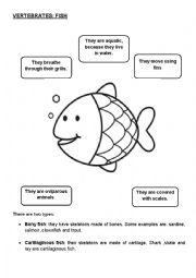 English worksheets fish characteristics and groups for Characteristics of fish