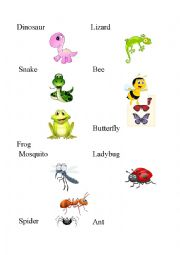 English Worksheet: Insects, amphibians and reptiles