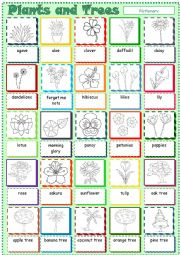 English Worksheet: Plants, Flowers and Trees