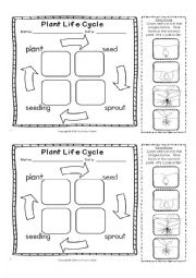 English Worksheet: Plants life cycle