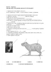Home > animals worksheets > Pets 101 – Capybaras