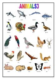 Animals pictionary worksheets