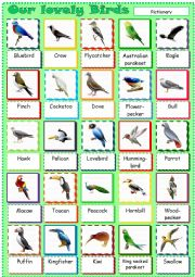 English Worksheet: Our lovely Birds