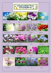 English Worksheet: wonderful flowers