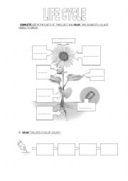 English Worksheet: Animals and plants life cycle