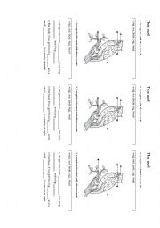 Origami Owl Coupon Discount Code