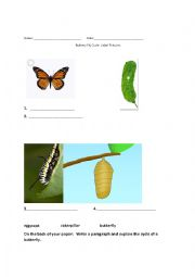 Write a paragraph about butterfly