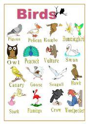 English Worksheet: POSTER - BIRDS