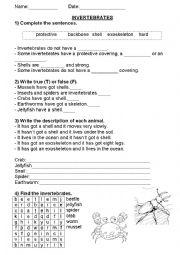English Worksheet: Invertebrates