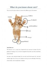 English Worksheet: What do you know about cats?