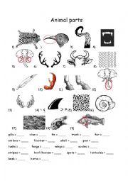 English Worksheet: Animal parts