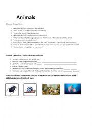 English Worksheet: revision vertebrates and invertebrates