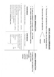 Diagram of animals reproduction