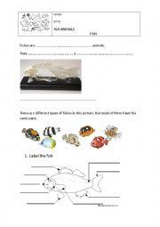 English Worksheet: Vertebrates: Fish