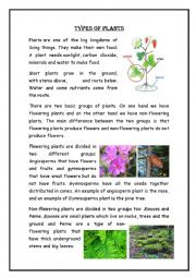 English Worksheet: plants