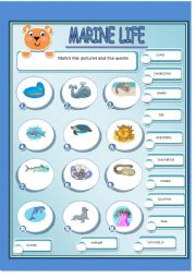 English Worksheet: MARINE LIFE 1