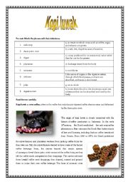 English Worksheet: Kopi luwak- One of the most expensive coffees in the world