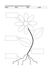 English Worksheet: the parts of the plant