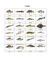English Worksheet: Fishes