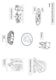English Worksheet: Habitats frog