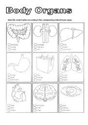 Body organs worksheets