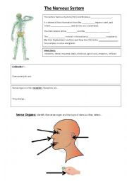English Worksheet: nervous system