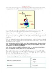 English Worksheet: CLIL the digestive system