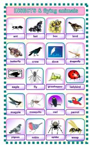 English Worksheet: INSECTS AND FLYING ANIMALS