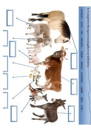 English Worksheet: Animals from the farm